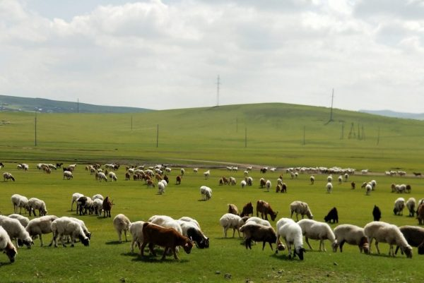 羊飼いと羊の群れ